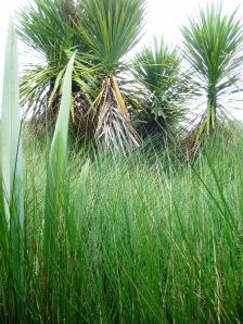Community-driven wetland restoration project