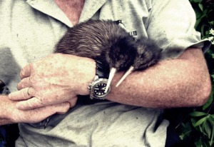 Kiwis ready for release