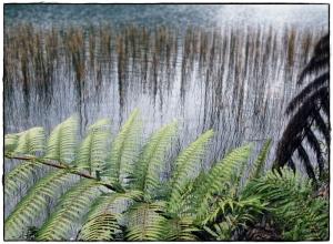 Tikitapu/Blue Lake, Rotorua