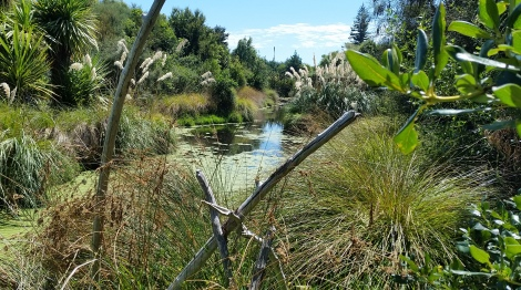 Mapua wetland, a drained paddock restored by the local community Nelson, New Zealand
