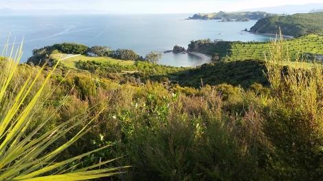 Rotoroa Island, December 2015