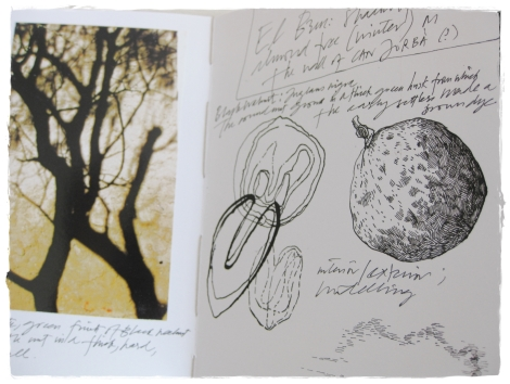 Natural history notebook from El Bruc, Spain, Monica Peters