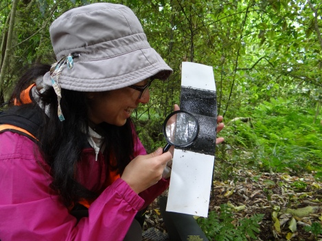 Noriko Peeters checking tracking cards_Karen Denyer, National Wetland Trust