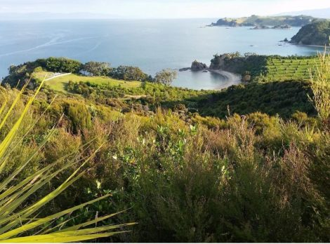 Rotoroa Is. ecological restoration project. Hauraki Gulf, Auckland, NZ.