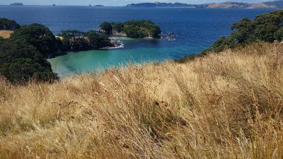 Ahuahu coastline - remnant pohutukawa (Metrosideros excelsa) and a view over to other islands in the Mercury group