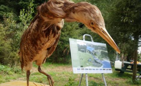 Bittern display