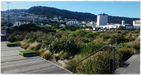 Waitangi Park, Wellington